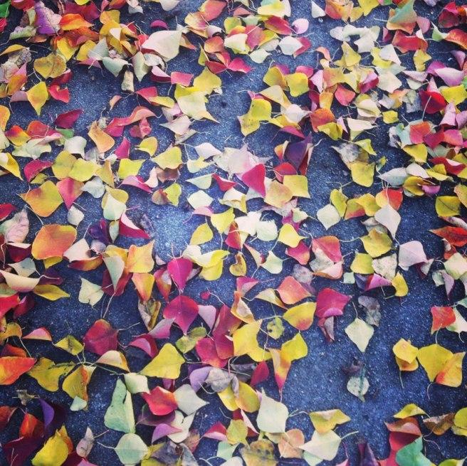 fall1_04